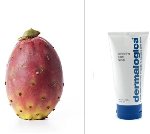 Natural Skin Care Ingredients - Barbary Fig available at SkinMedix.com